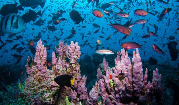 acension-eidcf012-coral-diversity