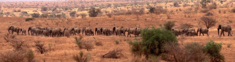Mali 23-022, Elephants Pans 8x10_1, Credit - Carlton Ward Photography
