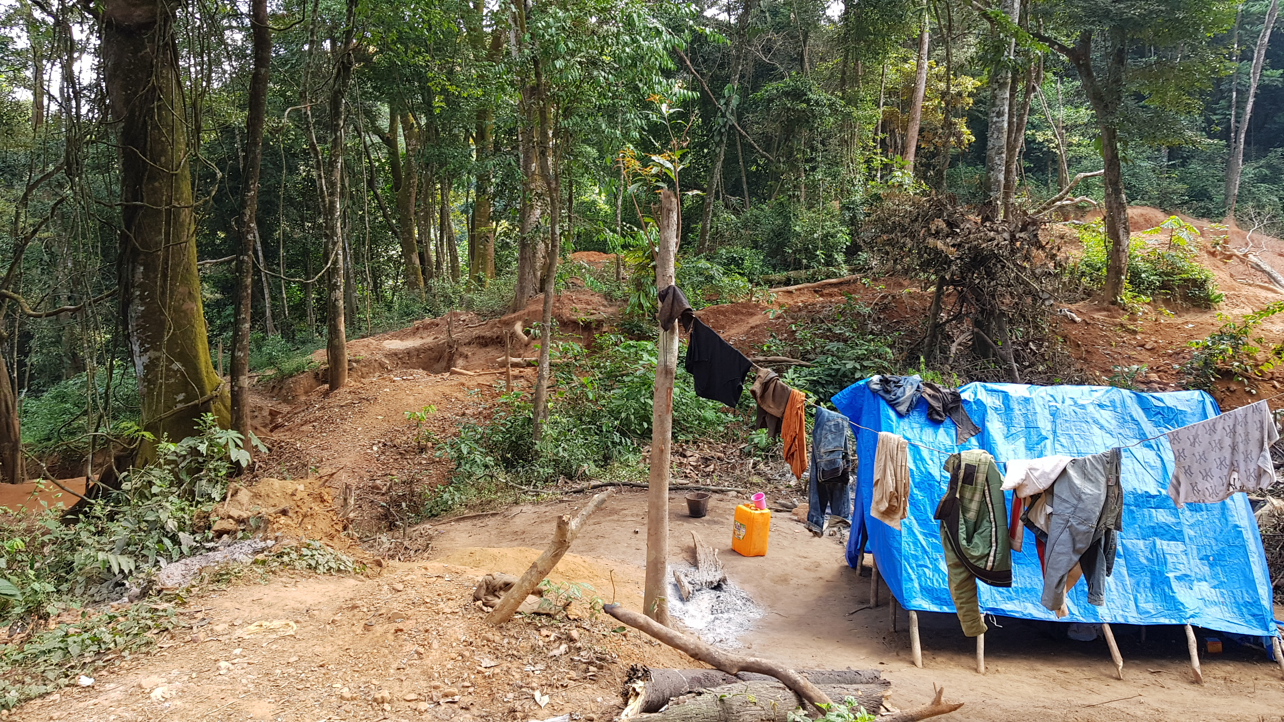 Gold mining in the forest