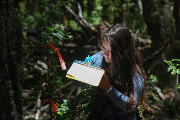 student recording vegetation data for forest bird survey